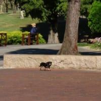 於大公園の四季 : セイタカアワダチソウ・・・館長にエキノコックス対策をお願いしておきました。