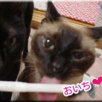 女子猫パール