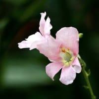 10/22 10月に咲いている花【6】