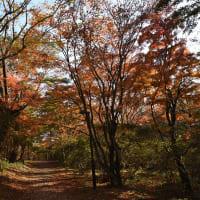 紅葉の伊香保 上ノ山公園