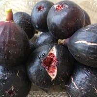 黒くて小さい品種の無花果