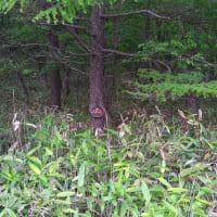木に食い込む看板
