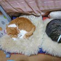 5月31日(日) ~猫の麦とごまの日常日記~
