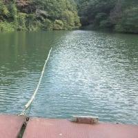 湖面の波緩和用に竹棒の改修を行いました(寄居町円良田湖)