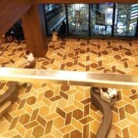 シャンソン歌手リリ・レイLILI LEY 下北沢 京王井の頭線で渋谷へ 渋谷スクランブルスクエアー