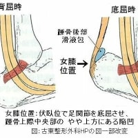 歯周病に対する女膝の灸について ver.1.4