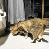 ベランダの日向ぼっこは日焼けが心配!