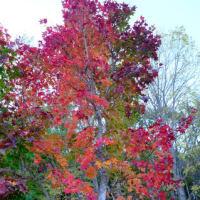 オホーツク管内遠軽町丸瀬布「いこいの森」の秋