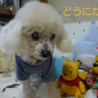 W低気圧に今期最強の寒気…(-_-)ウーム そして老犬ラスさん落ち着いた?