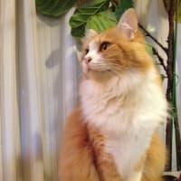今日は俵山の風景と猫の話と