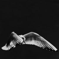 天使の分け前  4