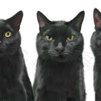 黒猫の健君