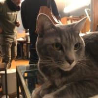 塩江の猫さん
