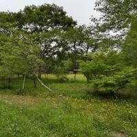 「野田生公園」