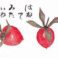 ハネツキ柿だそうです