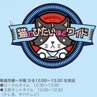 6月11日(火)の12時から放送の『猫のひたいほどワイド』番組内で、かもめパンをご紹介いただきます!