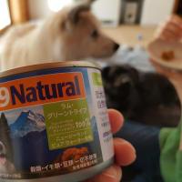 「【実食】トライプ缶詰」