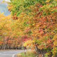 秋ですね・・