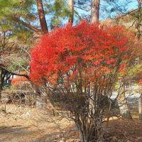 宝ヶ池紅葉なごり 山燃ゆ