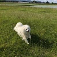 青空にホワイト犬