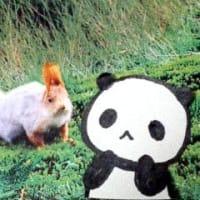 パンダさん。もびっくり