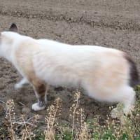 捜索〜散歩すれば必ず猫に会える地域〜