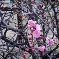氏神様の梅の花。