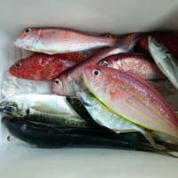 釣り魚料理(アマダイ・アジ)