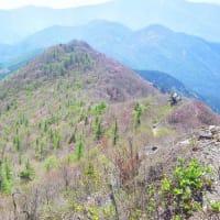アケボノ咲く西赤石山8