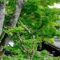 天龍寺の蓮池