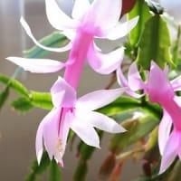 屋外の花 室内の花