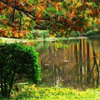 神代植物公園で水面に映る秋を見つける