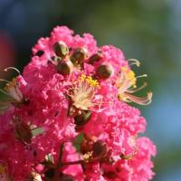夏の美しい花と可愛い昆虫たち ① 2021