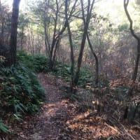 三木山森林公園の山の中を歩いてきた