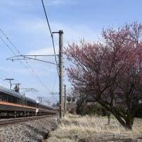 3月21日撮影 中央西線にて梅の花とWVしなのと313系