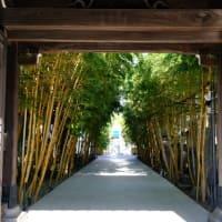 【青山】南青山の竹の参道が美しい梅窓院  Visited Baisouin Temple, Tokyo. 【Fujifilm X-T4】