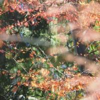 紅葉のある風景@2020/11/21 。。。
