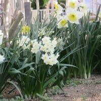 営業のご案内4&5月(赤印:開店日)ようやく春ですね!