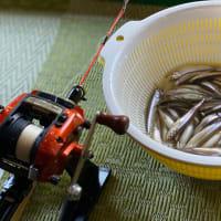 野尻湖わかさぎ釣りを体験★