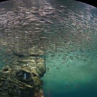 国内最大級の淡水生物の水族展示「滋賀県立 琵琶湖博物館」。トンネル水槽に感激