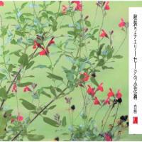 秋の装い小花柄/チェリーセージ
