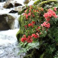 渓谷に咲く