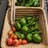 家庭菜園から取れた野菜達にも夏場との違いが