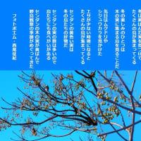 野鳥観察の季節
