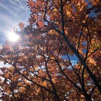 【大雪山国立公園・旭岳情報】紅葉と冬支度