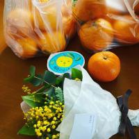 柑橘祭とショコラの祭典とミモザ