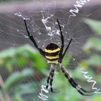 我が街中歩・蜘蛛とサボテン