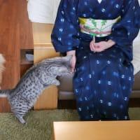 """""""猫ちゃん""""初体験"""