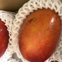 安くて美味しいご家庭用マンゴーで沖永良部島を元気に  /ふるさと納税/マンゴー/和泊町
