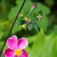 晩夏の古民家の庭先に咲く花